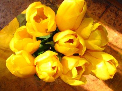 Лучшие цветы для элджернона