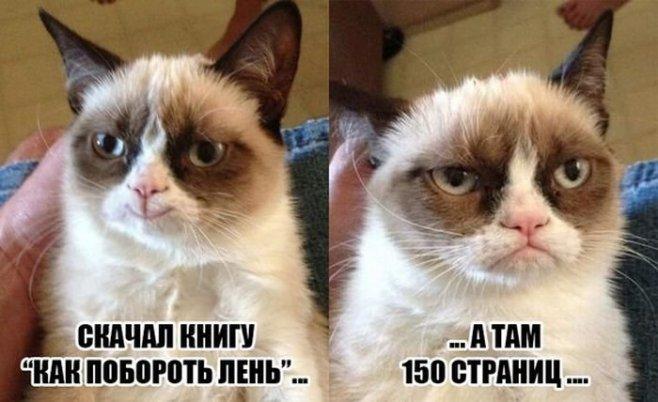 Коты картинки с юмором